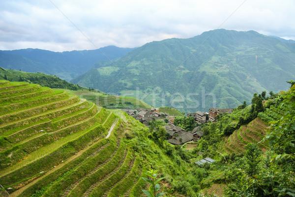 Longsheng rice terraces china Stock photo © Juhku