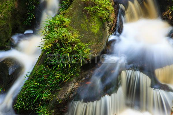 Small waterfall in jungle Stock photo © Juhku