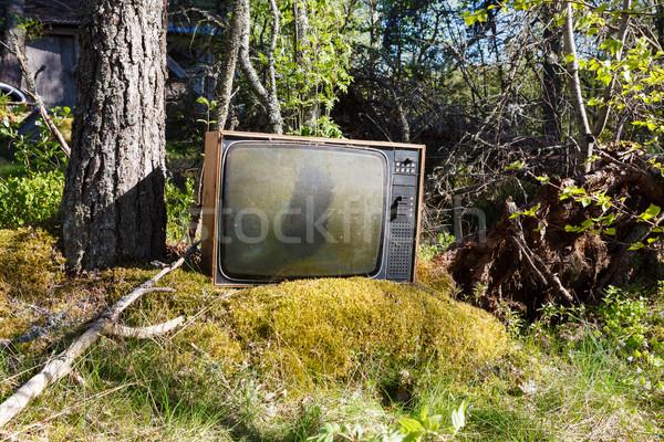 старые аналоговый телевидение лес заброшенный трава Сток-фото © Juhku