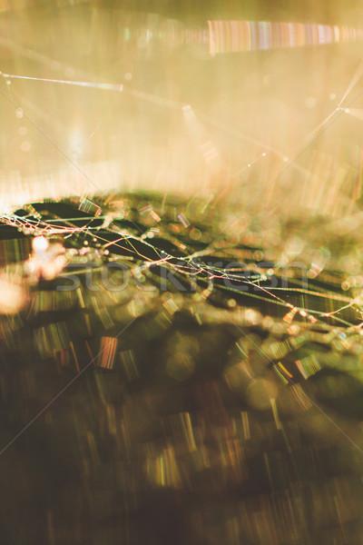 Spinneweb macro abstract ondiep veld netwerk Stockfoto © Juhku