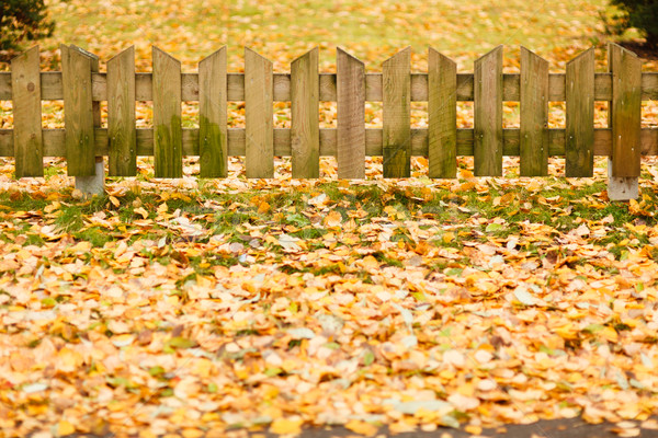 Small wooden fence and  yellow leaves of autumn Stock photo © Juhku