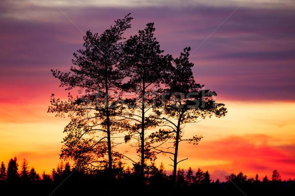 Stock fotó: Fa · sziluett · gyönyörű · vibráló · naplemente · felhők