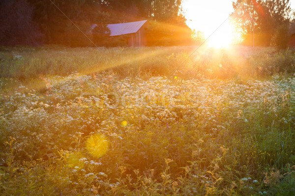 Meadow landscape at sunset Stock photo © Juhku