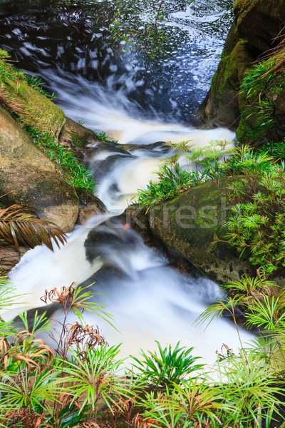 Small waterfall in jungle Stock photo © Juhku