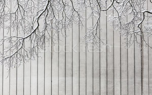 Drzewo konkretnych ściany zimą tekstury Zdjęcia stock © Juhku