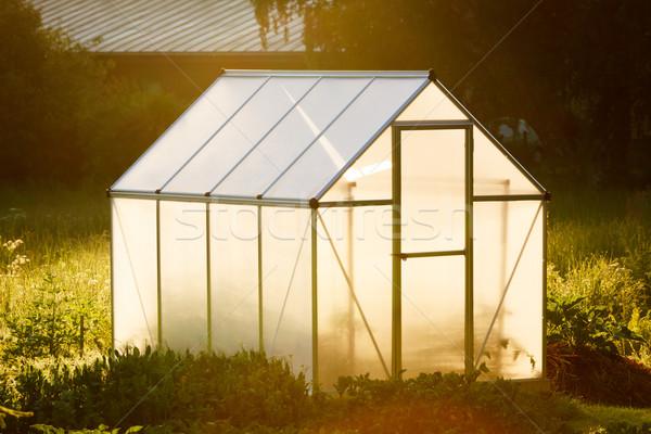 Mały szklarnia podwórko złoty świetle świcie Zdjęcia stock © Juhku
