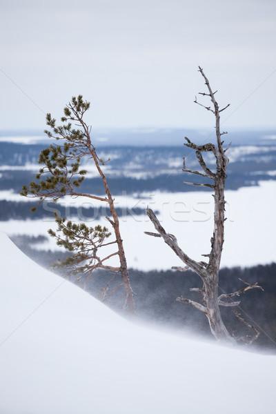 白 雪 岩 丘 風景 ストックフォト © Juhku
