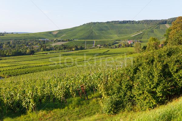 German wine fields landscape at summer Stock photo © Juhku