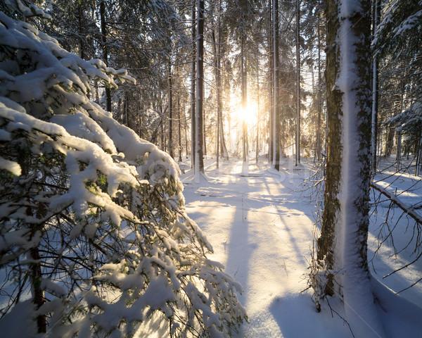 Zonneschijn winter bos avond licht sneeuw Stockfoto © Juhku