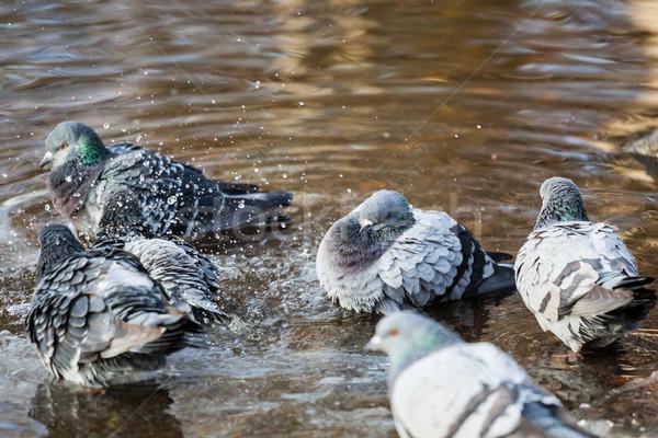 Madarak fürdik madár toll tó vicces Stock fotó © Juhku