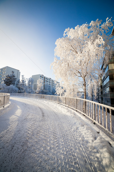 Cold fresh winter morning  Stock photo © Juhku