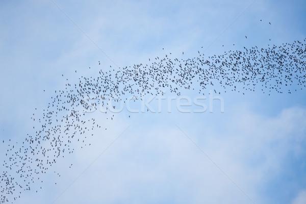 Vliegen park borneo Maleisië natuur zwarte Stockfoto © Juhku