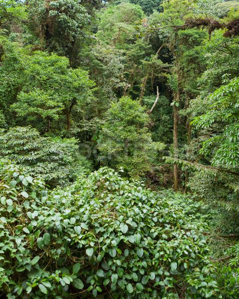 Albero fogliame foresta pluviale Costarica natura foglie Foto d'archivio © Juhku