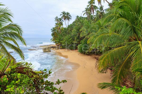 Idilli tengerpart fa óceán kő kő Stock fotó © Juhku