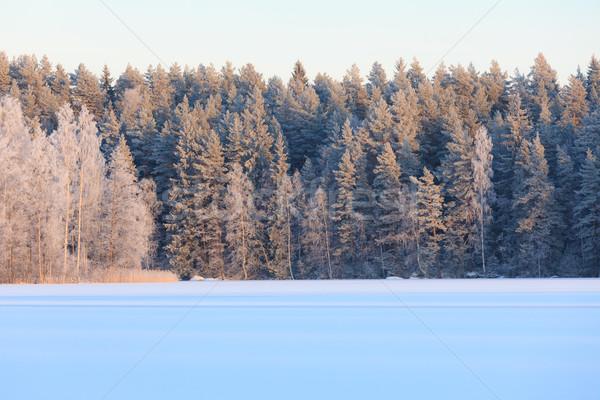 Inverno lago cenário Finlândia noite floresta Foto stock © Juhku