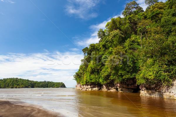 плотный джунгли пляж Blue Sky холме воды Сток-фото © Juhku