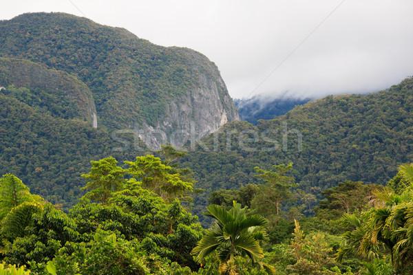 экзотический леса пейзаж парка Борнео Малайзия Сток-фото © Juhku