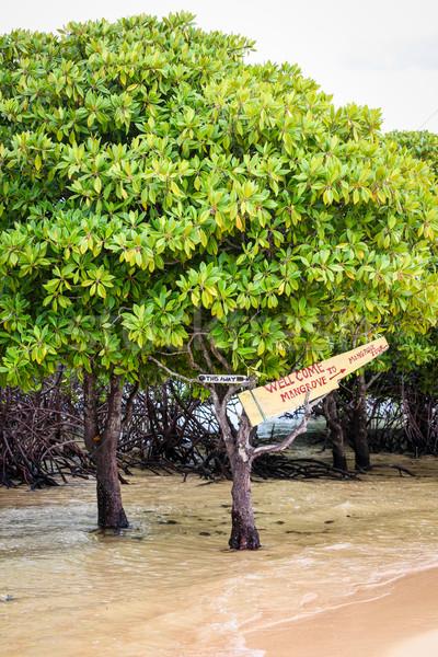 Mangrove tour sign in tree Stock photo © Juhku