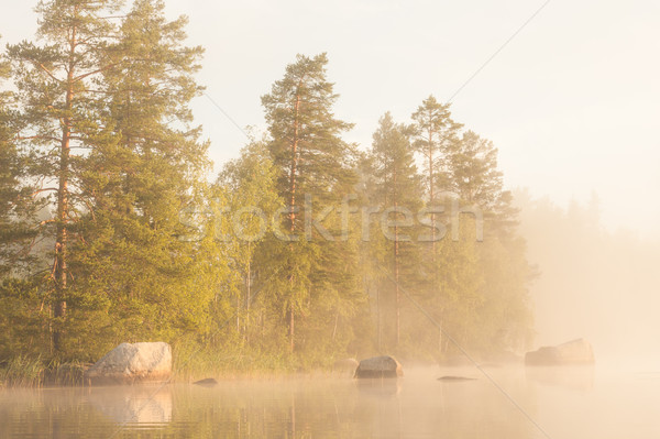 Forest by the lake and foggy morning Stock photo © Juhku