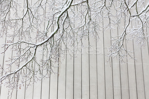 Fa ágak beton fal tél textúra Stock fotó © Juhku