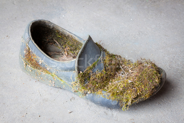Abandoned moss-grown shoe Stock photo © Juhku