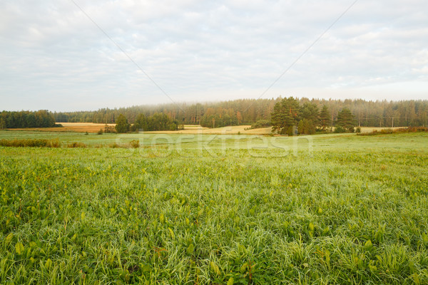 Grassland field summer morning Stock photo © Juhku