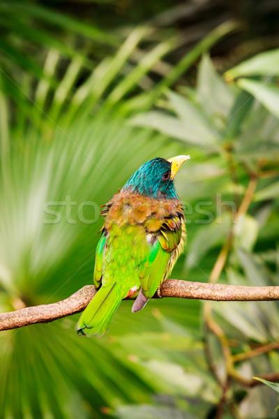 Exotisch kleurrijk vogel vergadering tak groot Stockfoto © Juhku
