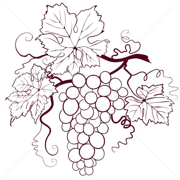 Szőlő levelek szerkeszthető étel természet levél Stock fotó © jul-and