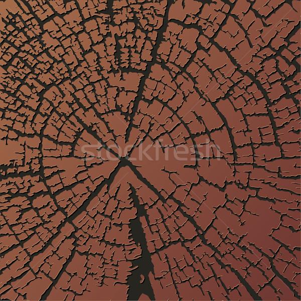 текстура древесины ежегодный кольцами текстуры дерево Сток-фото © jul-and