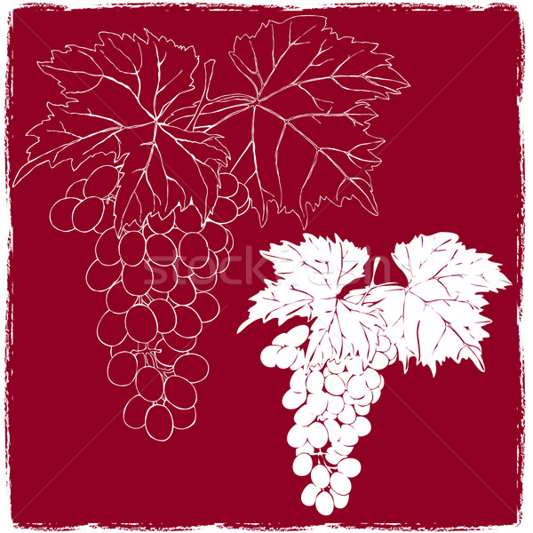 Zdjęcia stock: Winogron · pozostawia · żywności · charakter · liści