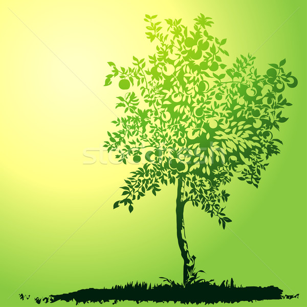 Jovem verde apple tree silhueta luz solar Foto stock © jul-and