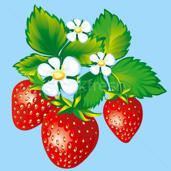 Truskawek pozostawia kwiaty liści owoców Zdjęcia stock © jul-and