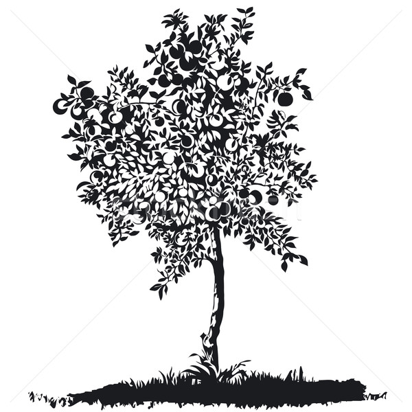 Apple tree silhouette Stock photo © jul-and