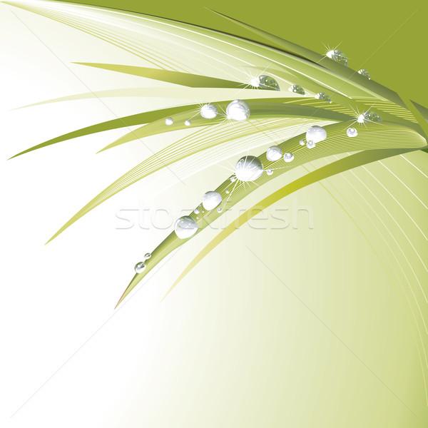 Zdjęcia stock: Zielone · liście · zielona · trawa · wiosną · trawy · streszczenie