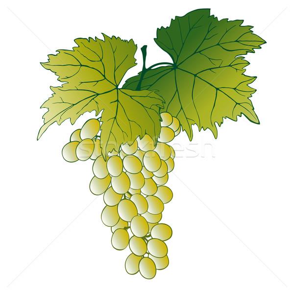 Winogron pozostawia odizolowany biały żywności Zdjęcia stock © jul-and