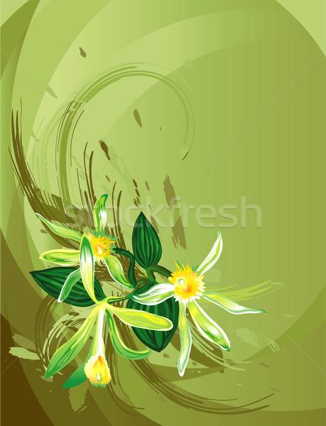 Vanília virág szerkeszthető természet levél zöld Stock fotó © jul-and