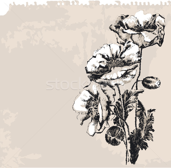 Poppy Flowers On Grunge Background Stock photo © jul-and