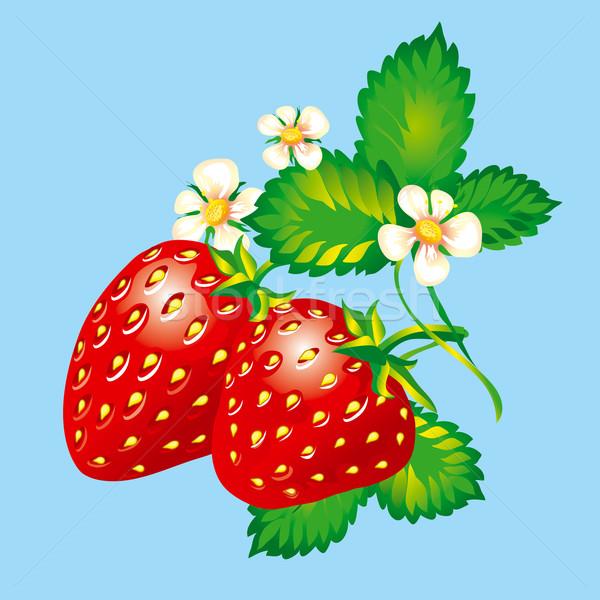 Eprek levelek virágok szerkeszthető levél gyümölcs Stock fotó © jul-and