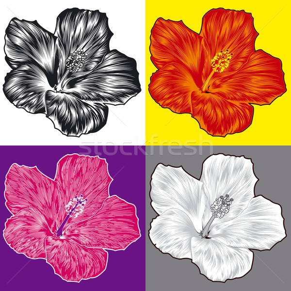 Hibiszkusz virág virág szett virágok szerkeszthető Stock fotó © jul-and
