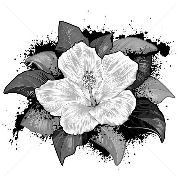 Hibiszkusz virág rajz fehér szerkeszthető természet Stock fotó © jul-and