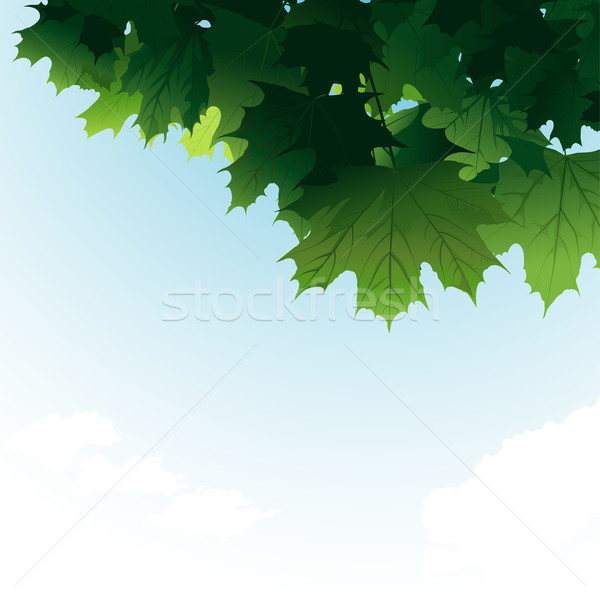 Green Maple Leaves In The Sky Stock photo © jul-and