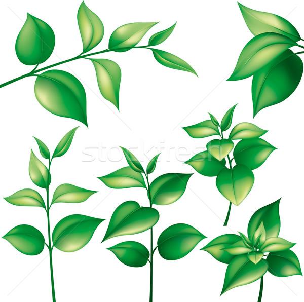 Szett zöld levelek különböző ágak szerkeszthető absztrakt Stock fotó © jul-and