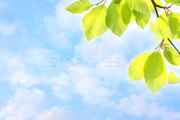 Tavasz levelek álomszerű égbolt fény levél Stock fotó © Julietphotography