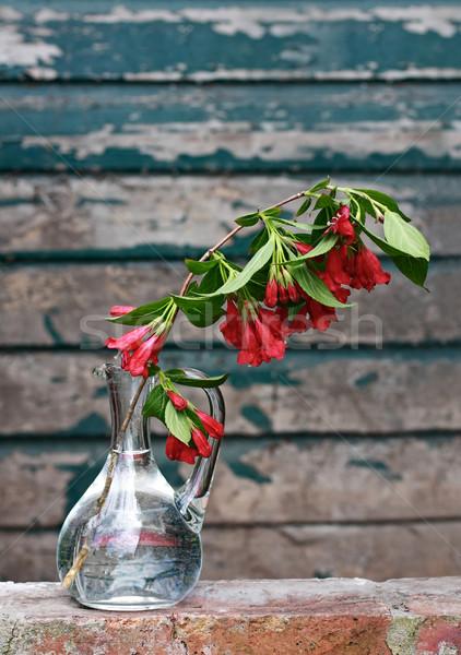 Ramo fiori di primavera vetro vaso muro vernice Foto d'archivio © Julietphotography
