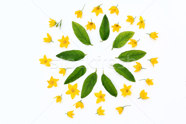 Yellow flowers and green leaves in the shape of the circle on white Stock photo © Julietphotography