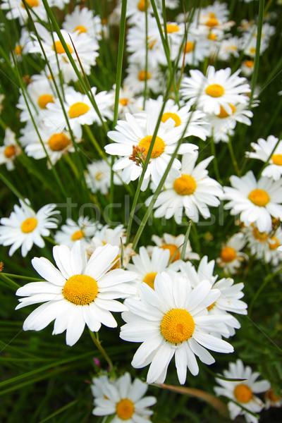 Foto d'archivio: Bella · fiori · giardino · fiore · natura · bellezza