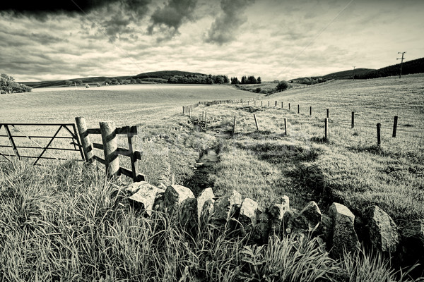 Spring rural landscape with stone wall,  Scotland  Stock photo © Julietphotography