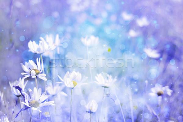 Belo artístico prado margaridas sonhador cores Foto stock © Julietphotography