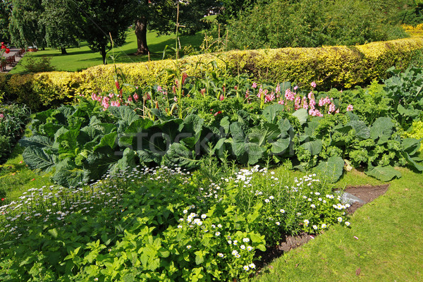 Vegetable garden  Stock photo © Julietphotography
