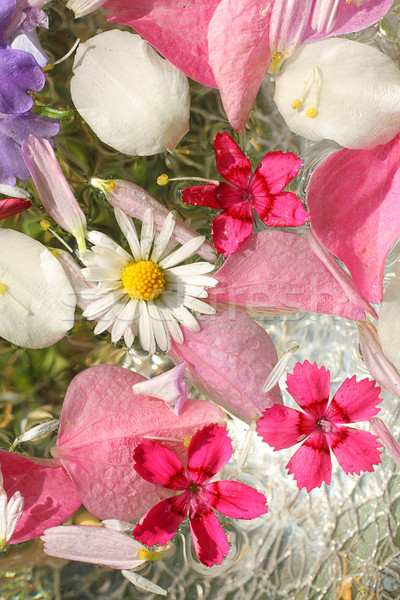 Beautiful, floral pink, background Stock photo © Julietphotography